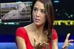 Tanem Sivar'dan dikkat çeken 'papağana şiddet' açıklaması