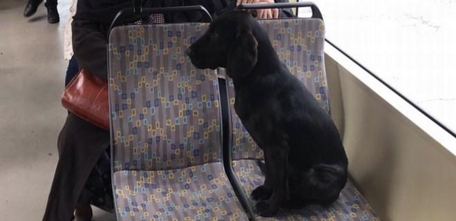 Sokak köpeği üşüyünce tramvaya bindi