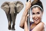 Yonca Evcimik, Kenya'da bir fili evlat edindi