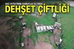 İstanbul'da kaz yetiştirme kamuflajı altında dehşet çiftliği!