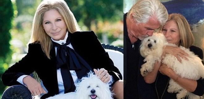 Barbara Streisand ölen köpeğini klonlattı
