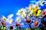 Meteoroloji'den 'bahar havası' müjdesi!..