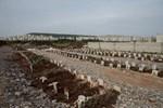 Afrin'de teröristlerin mezarlığı bulundu!