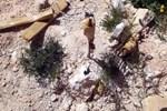 TSK'dan Afrin'de imha edilen mayın ve EYP'lerle ilgili açıklama