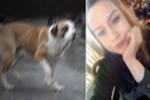 Köpeğin saldırısına uğradı, hem işinden hem evinden oldu!