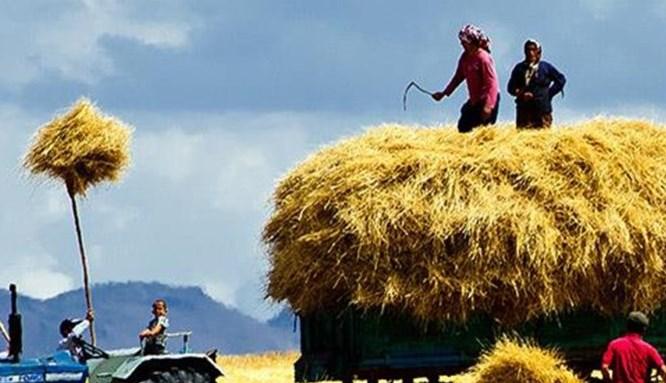 Tarımda yeni yatırımlara dev destek