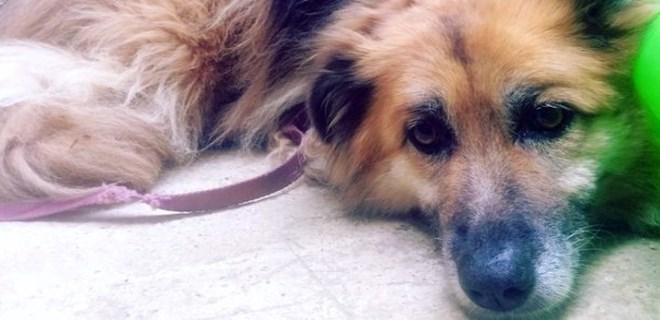 Kadıköy'de şiddete uğrayan köpek sahibine kavuştu!
