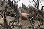 Hakkari'de ormanlık alanda deşifre oldu!..
