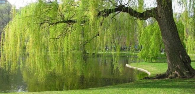 İlk 'Millet Bahçesi' nereye yapılacak?..