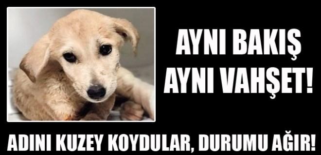 Mardin'de 2 aylık yavru köpeği vurdular!