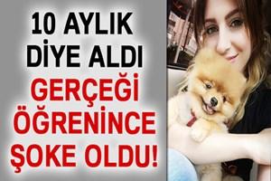 Genç kadın kaybettiği köpeğine ağlıyor