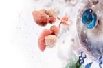 ABD'de kanseri yiyen ilaç üretildi!