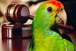 100 bin liralık 'papağan' boşanması!