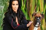 Kim Kardashian köpeğine silikon taktırdı!