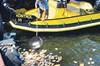 İzmir Alsancak Vapur İskelesi çevresinde görülen toplu balık ölümleri endişe yarattı. İrili ufaklı...