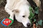 TRT hayvan severleri kızdırdı!