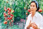 Fatma Girik'in aklı domateslerinde kaldı!