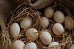 Yumurta astımın ilacı!..