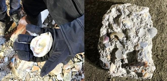 Çöken binanın enkazında deniz kabukları bulundu