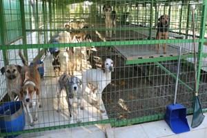 Burhaniye Belediyesi'nden sokak hayvanları için oyun parkı