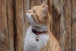 Efe isimli kedi zekasıyla hayran bırakıyor
