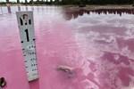 'Pembe göl' görenleri şaşırtıyor!