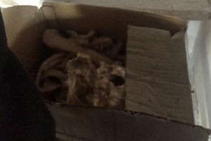 Ev tadilatında insan iskeleti bulundu!