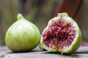 Afrodizyak incir