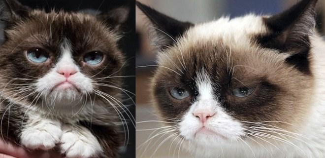 İnternetin göz bebeği Grumpy Cat öldü!