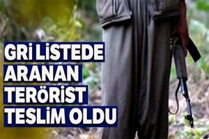 Gri listede aranan terörist teslim oldu