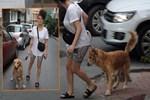 Dilan Çıtak Tatlıses'in inatçı köpeğiyle imtihanı