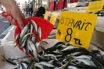 Ramazan bereketi, balık fiyatlarını düşürdü