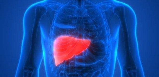 Karaciğerine iyi bak!
