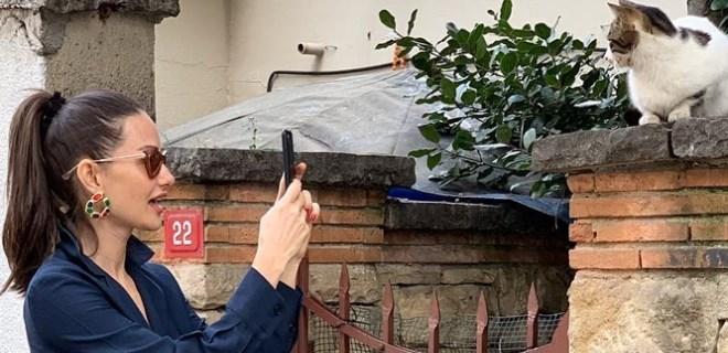 Yasemin Özilhan sokak kedilerini fotoğrafladı