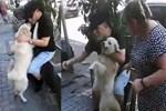 Kayıp köpek sahibine kavuştu